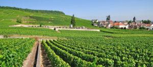 wijngaarden in het noorden van Frankrijk
